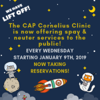 Spay/Neuter at The Cornelius Clinic